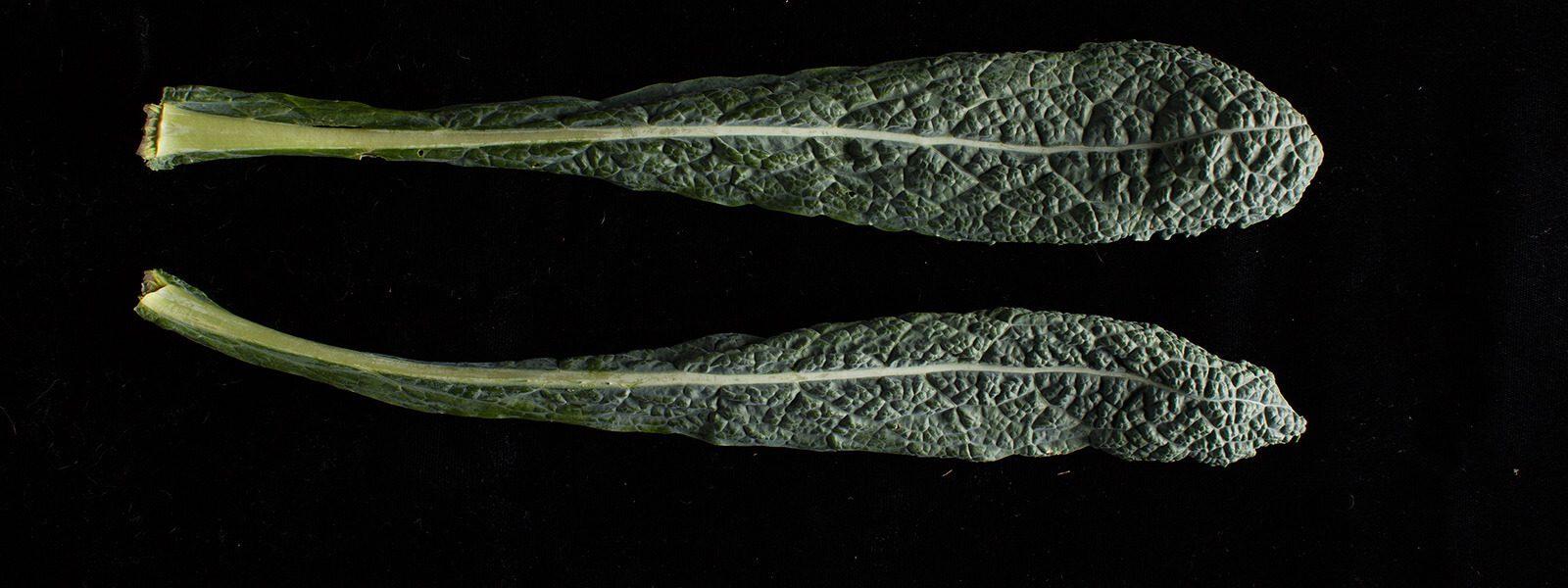 2 lacinato kale leaves.