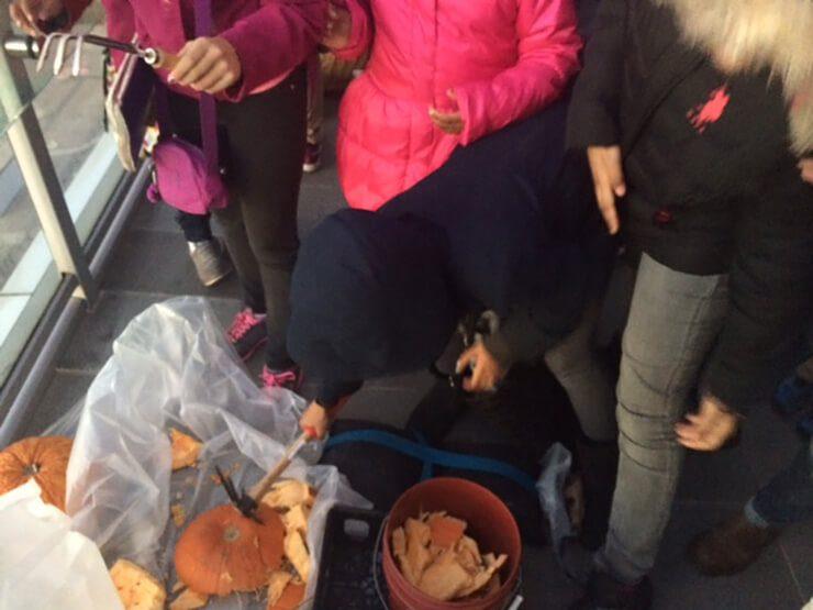 Students smashing pumpkins.