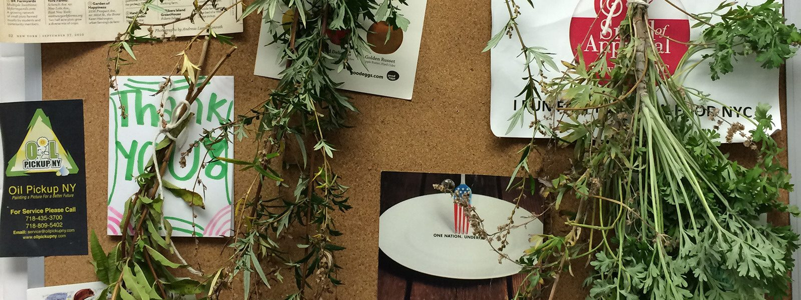 Herbs drying on the office cork board.