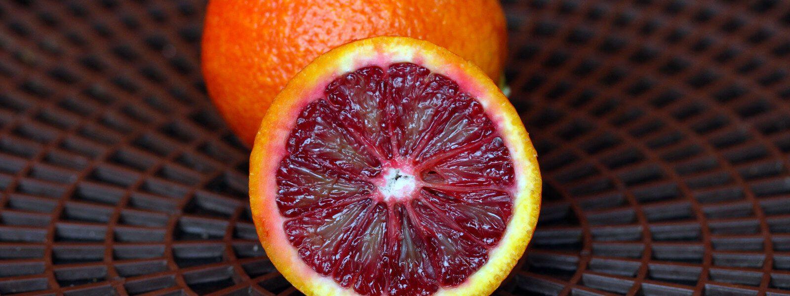 print-citrus-3-1.14.2014