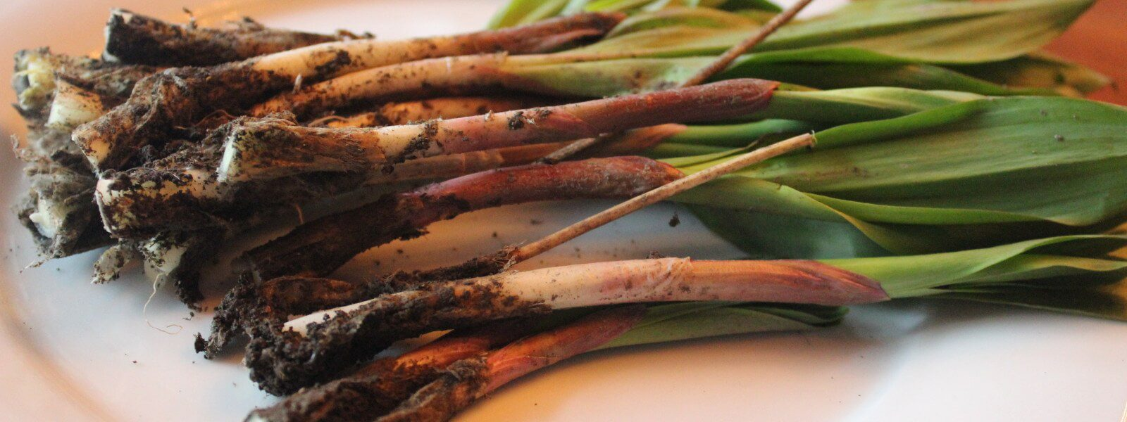 Freshly-picked ramps on a plate.