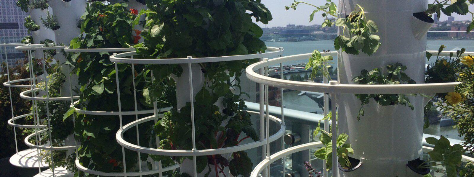 Aeroponic grow towers.