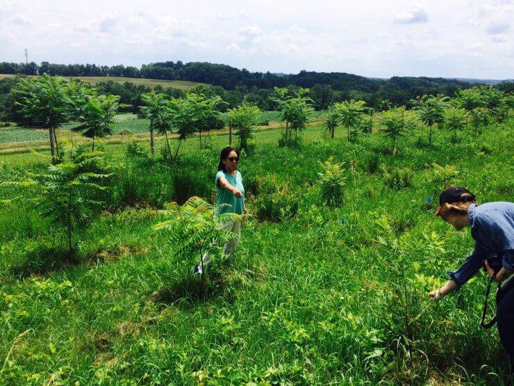 Tama showing her sumac farm.