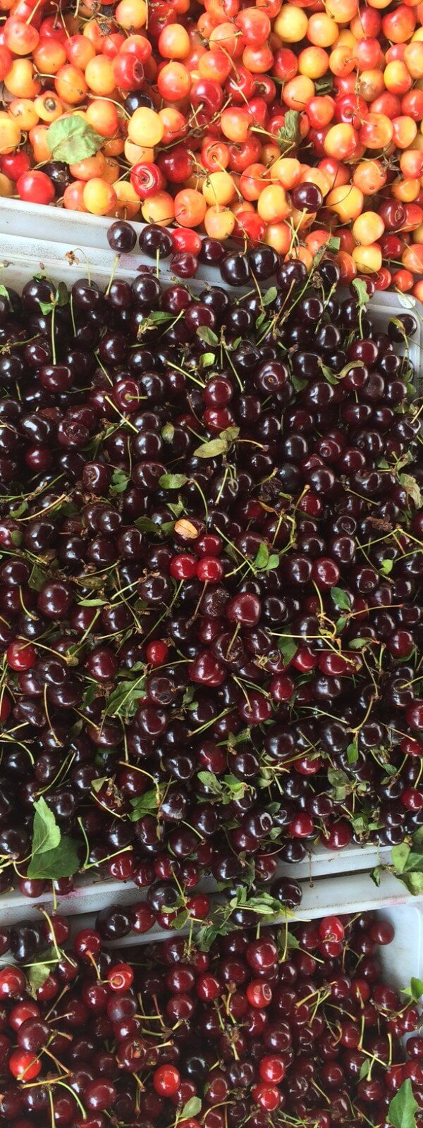 Sour and sweet cherries.