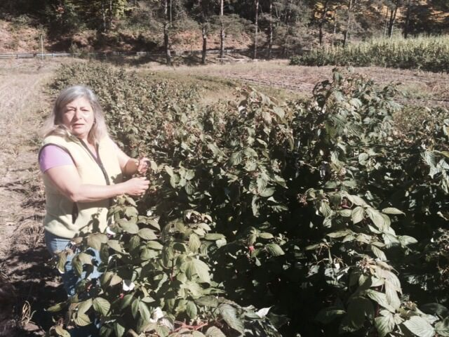 Franca picking produce in her field.