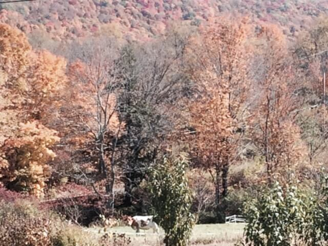 Trees, mountains, and Isadora the cow.