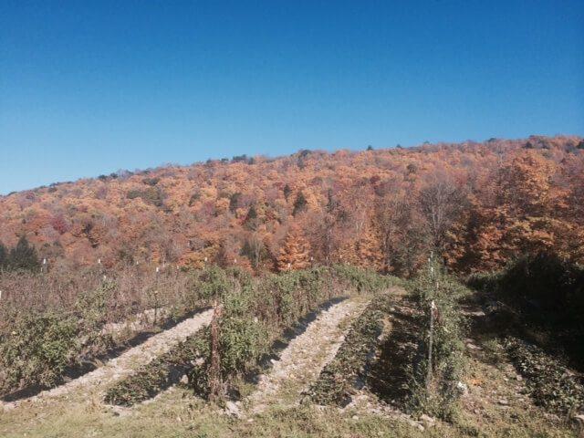 Mountain view of Franca's farm.