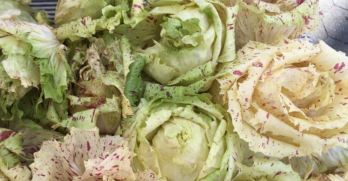 Castelfranco chicories.