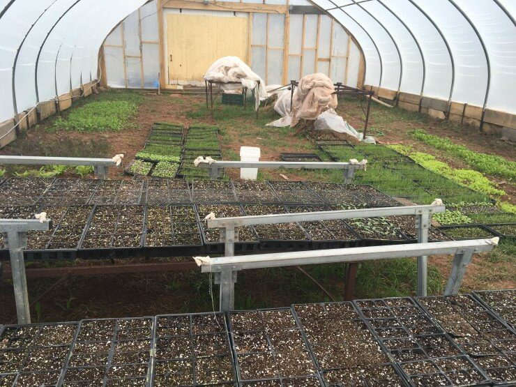 Planting trays in the greenhouse.