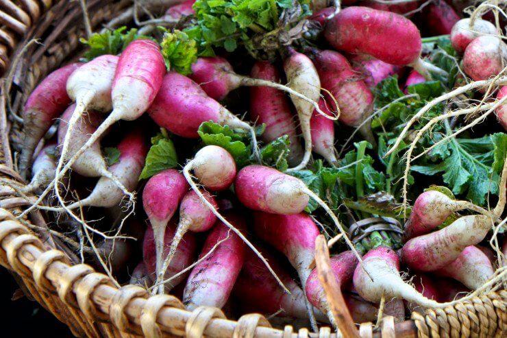 Basket of French breakfast radishes.