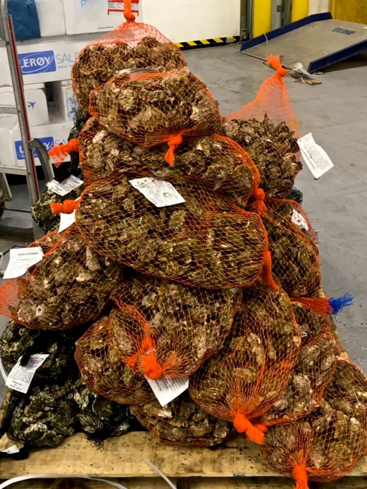 Bags of oysters in a stack.