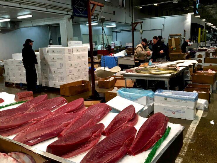Large tuna fillets on ice.