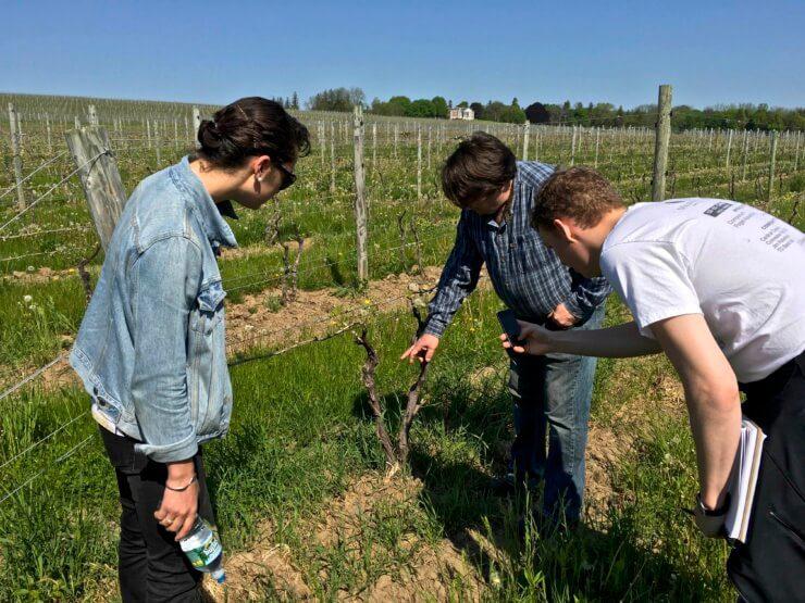 3 people examining a planting at Ravines Vineyards.
