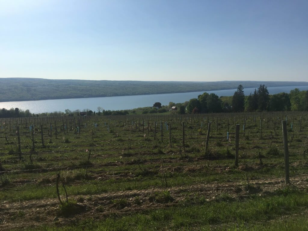 View of a lake.