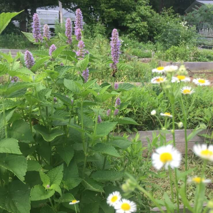 Wildflowers in garden beds at Meadows and More.