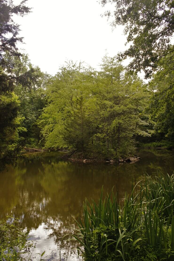 Trees and the pond.