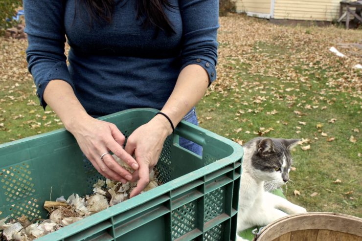 Chef Amy peeling garlic in a crate with a cat next to her.