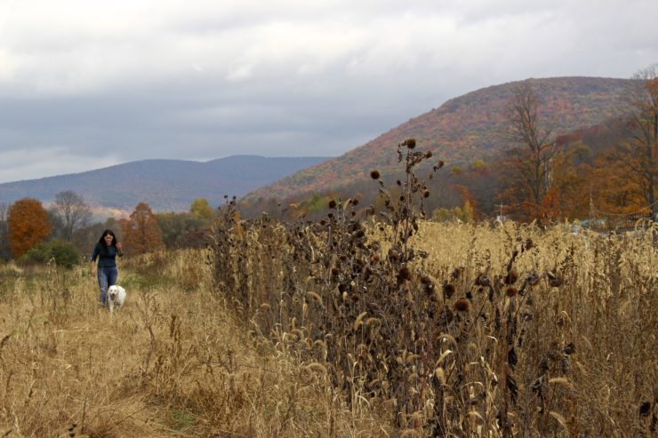 Woman walking dog in a field, mountains in background.