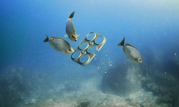3 fish underwater with beverage rings.