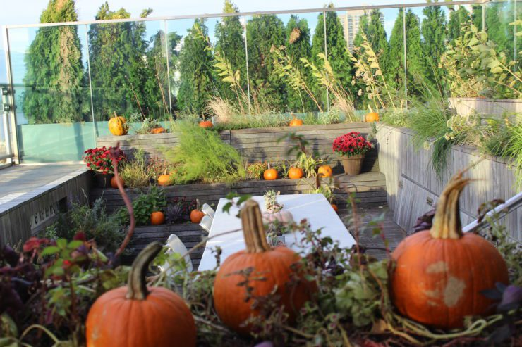 Pumpkins decorating the Rooftop Garden.