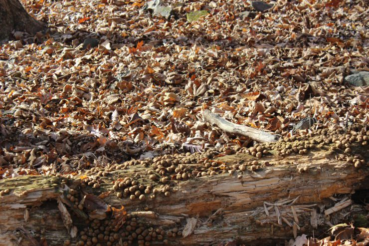 More mushrooms growing on a fallen tree.
