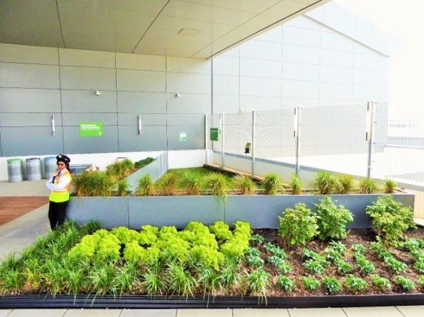 635713469559282388-jfk-jetblue-rooftop-lounge-landscaping-and-beyond-that-the-wooftop-dog-walk