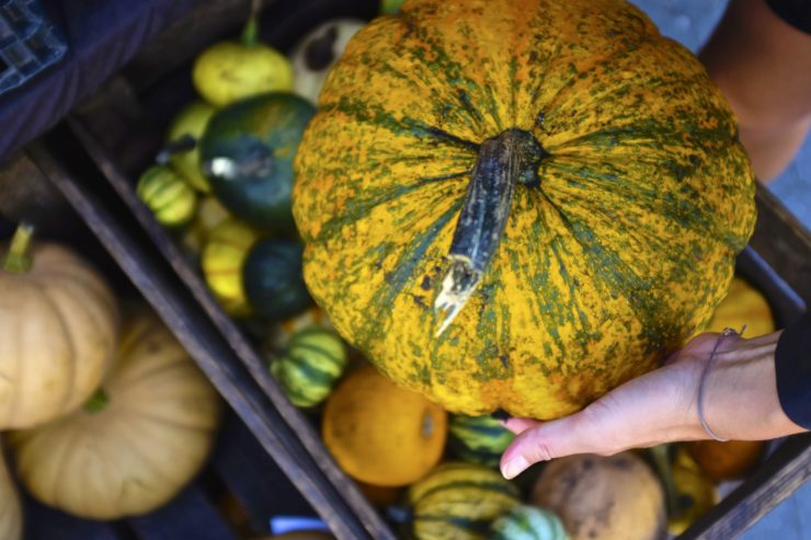 Hands holding a yellow and green speckled pumpkin.