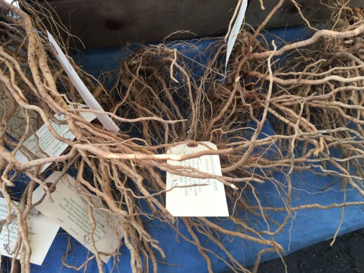 Bitter roots with tags.