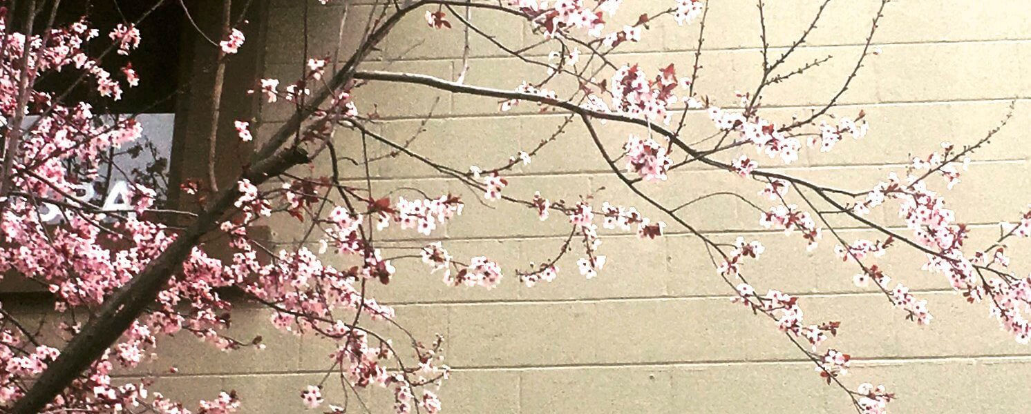 A branch with cherry blossoms.