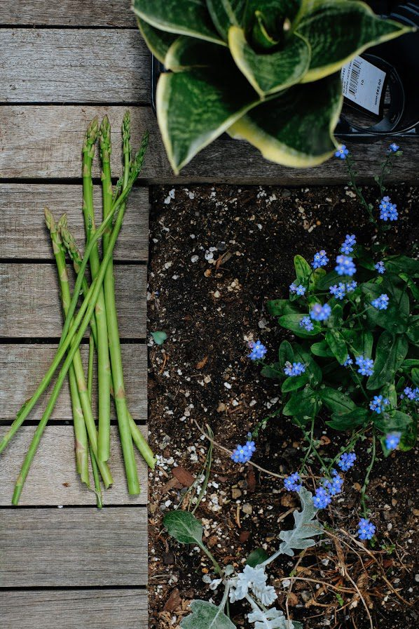 Harvested asparagus next to blue wildflowers.