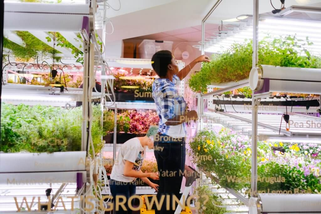 2 people looking at plants in the hydroponic growing room at Farm.One.
