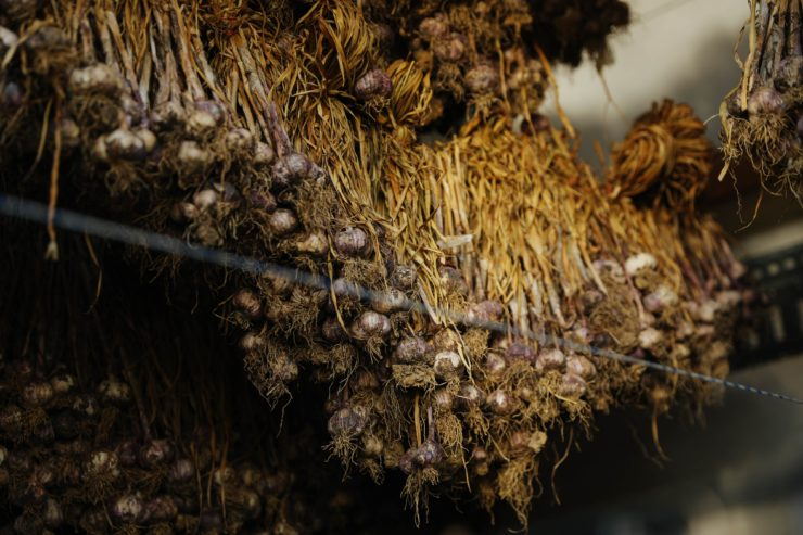 Garlic curing in a shipping container.
