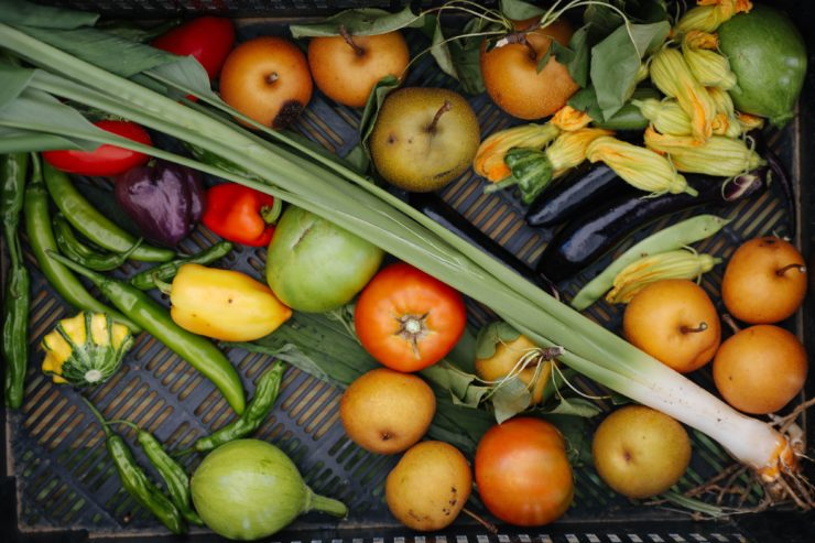 Harvested tomatoes, peppers, squash blossoms and more.