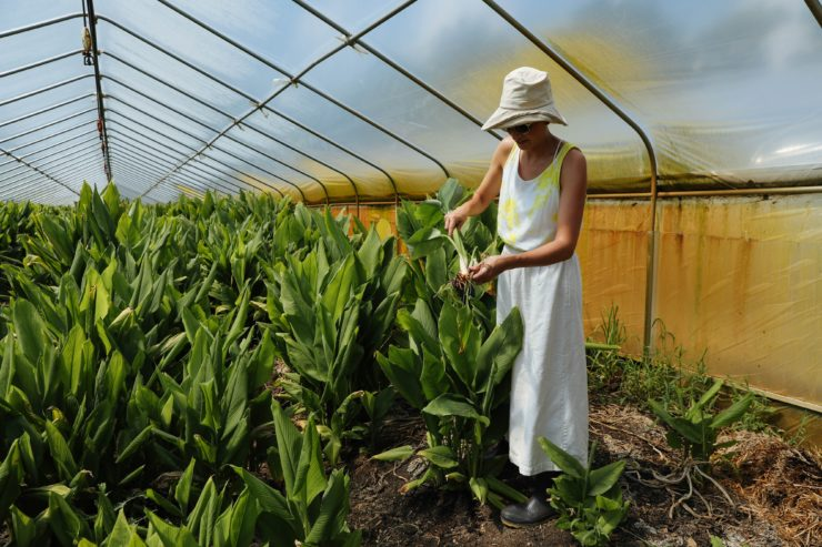 Meghan in the greenhouse with the turmeric crop.