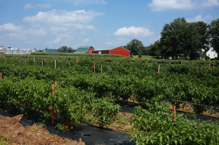 Barns and crops at Lani's Farm.