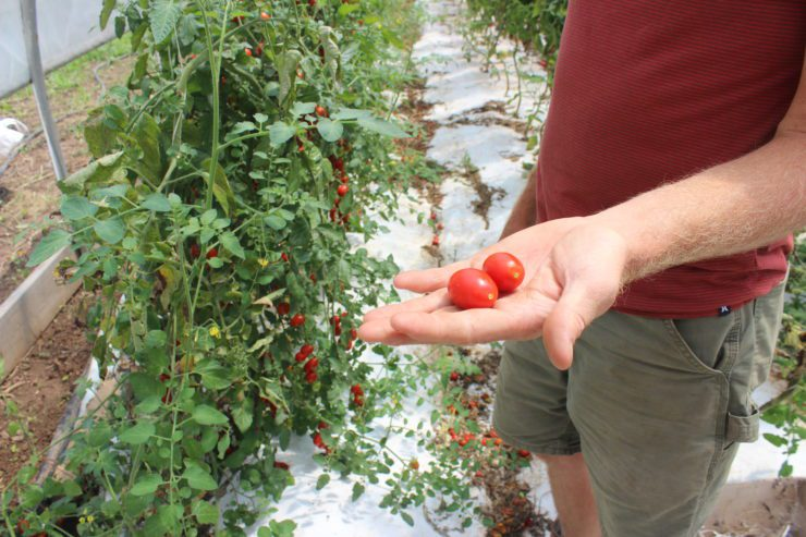 Chris holding two cherry tomatoes in his hand.