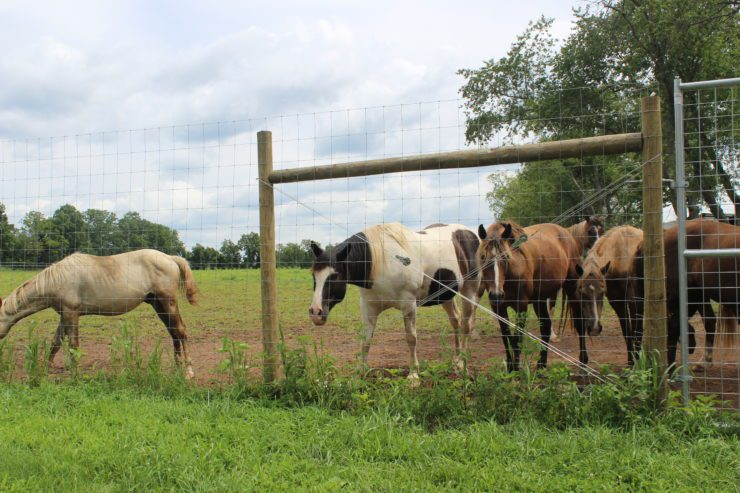 Several horses in a fenced area.