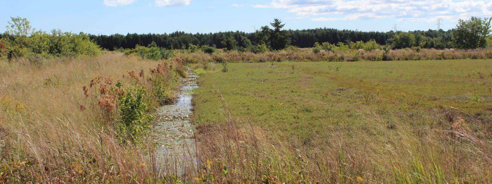 Secret foraging location - cranberry bog.
