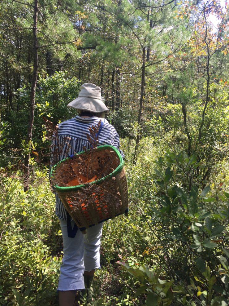 Meghan walking with foraging basket.