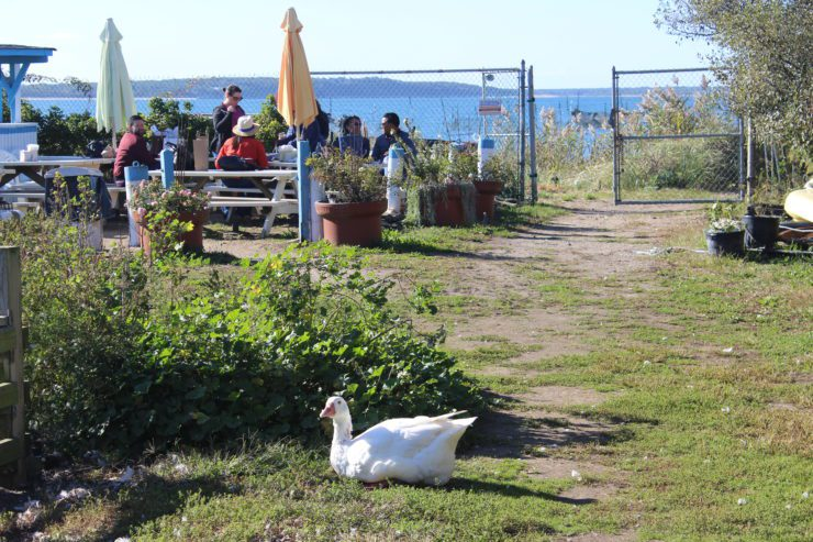 White goose with Press team in background.