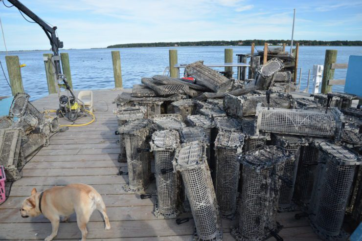 Oyster baskets on the dock, dog in foreground.
