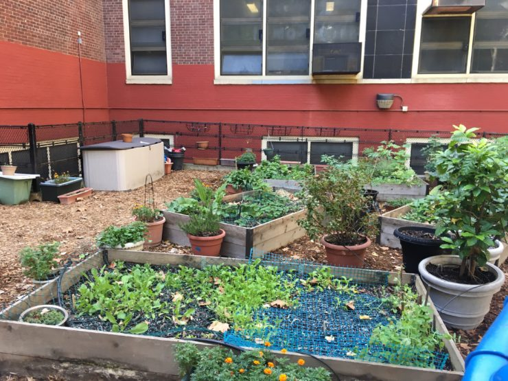Raised bed garden and potted plants at PS 33.