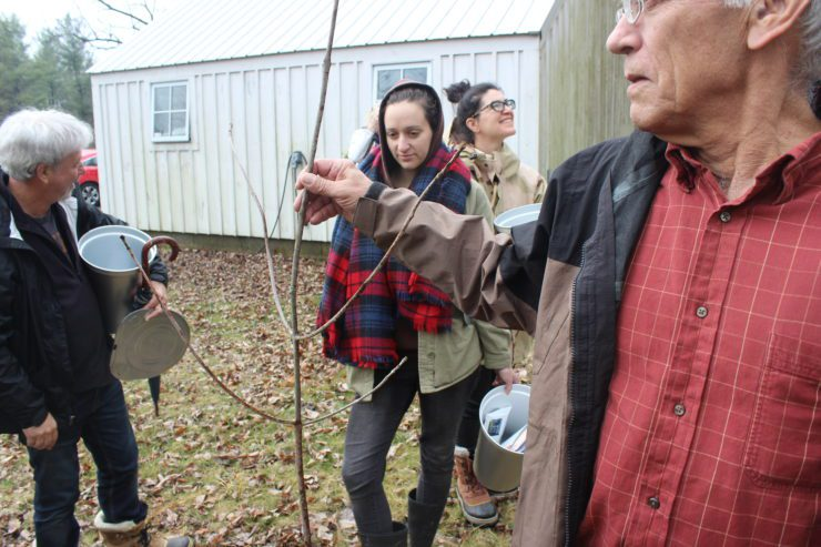 4 people looking at a sugar maple branch.