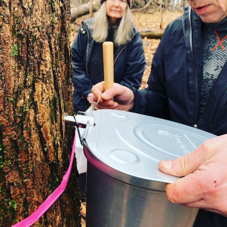 A tap bucket being affixed to a tree.