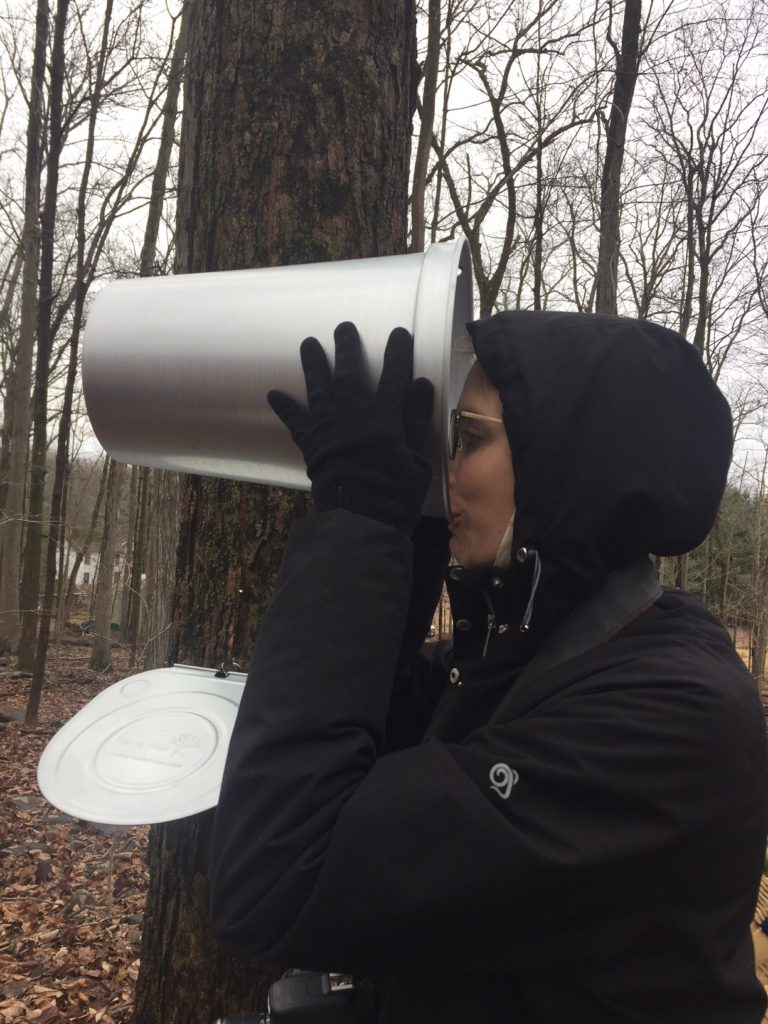 Forager Meghan drinking fresh tree sap from a tap bucket.